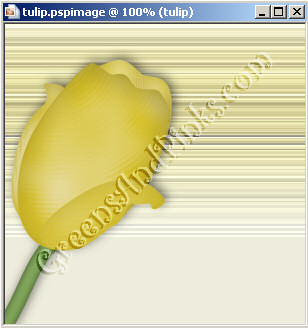 tulip-07
